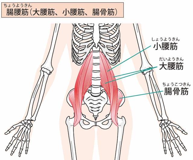 反り腰に関係するインナーマッスル腸腰筋